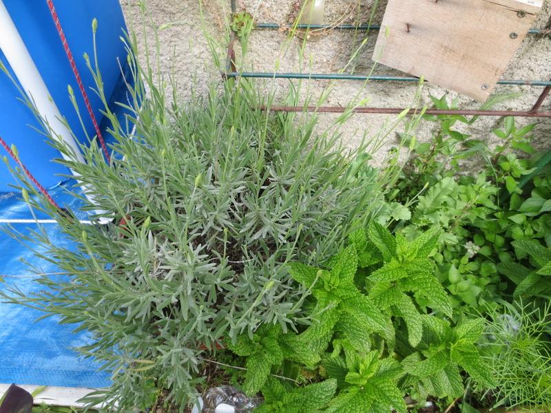 Le jardin au mois de juin centerblog for Juin au jardin
