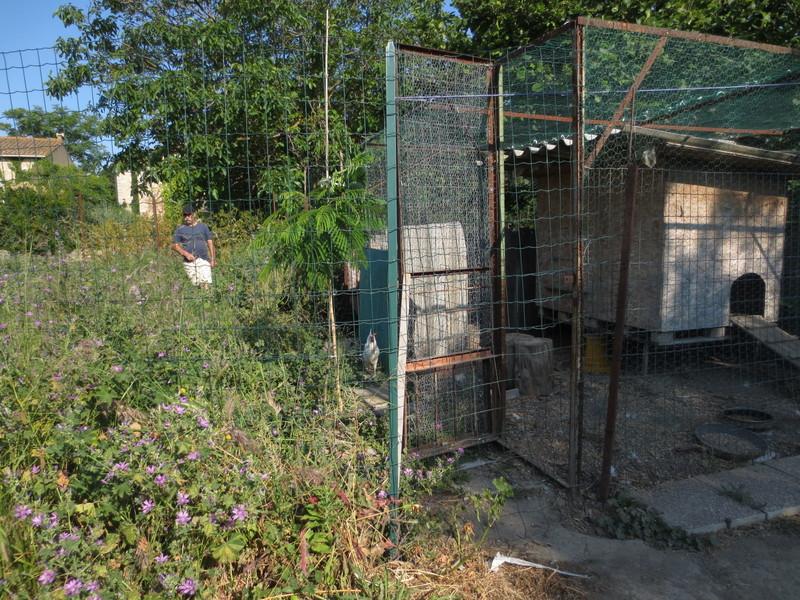 Jardin au mois de juin 2015 les poules centerblog for Juin au jardin