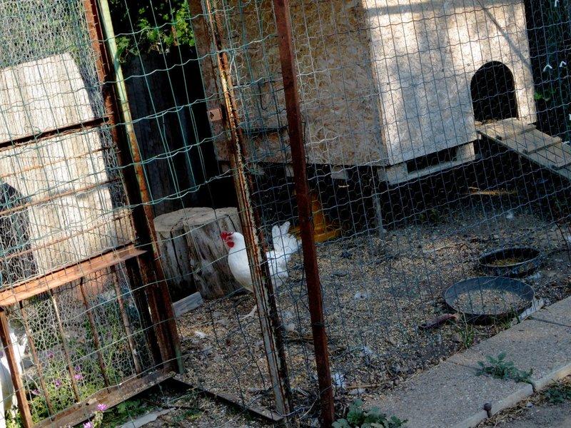 Jardin au mois de juin 2015 poules centerblog for Jardin lune juin 2015