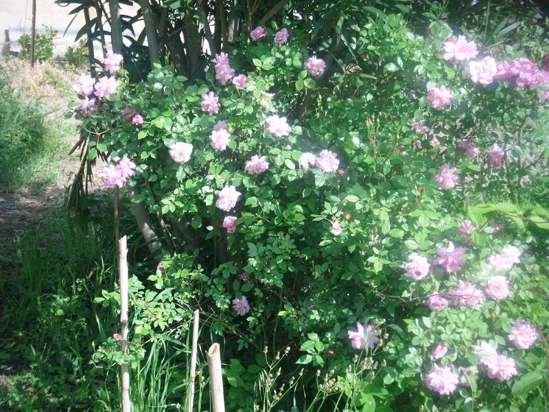 Le jardin potager centerblog for Le jardin potager