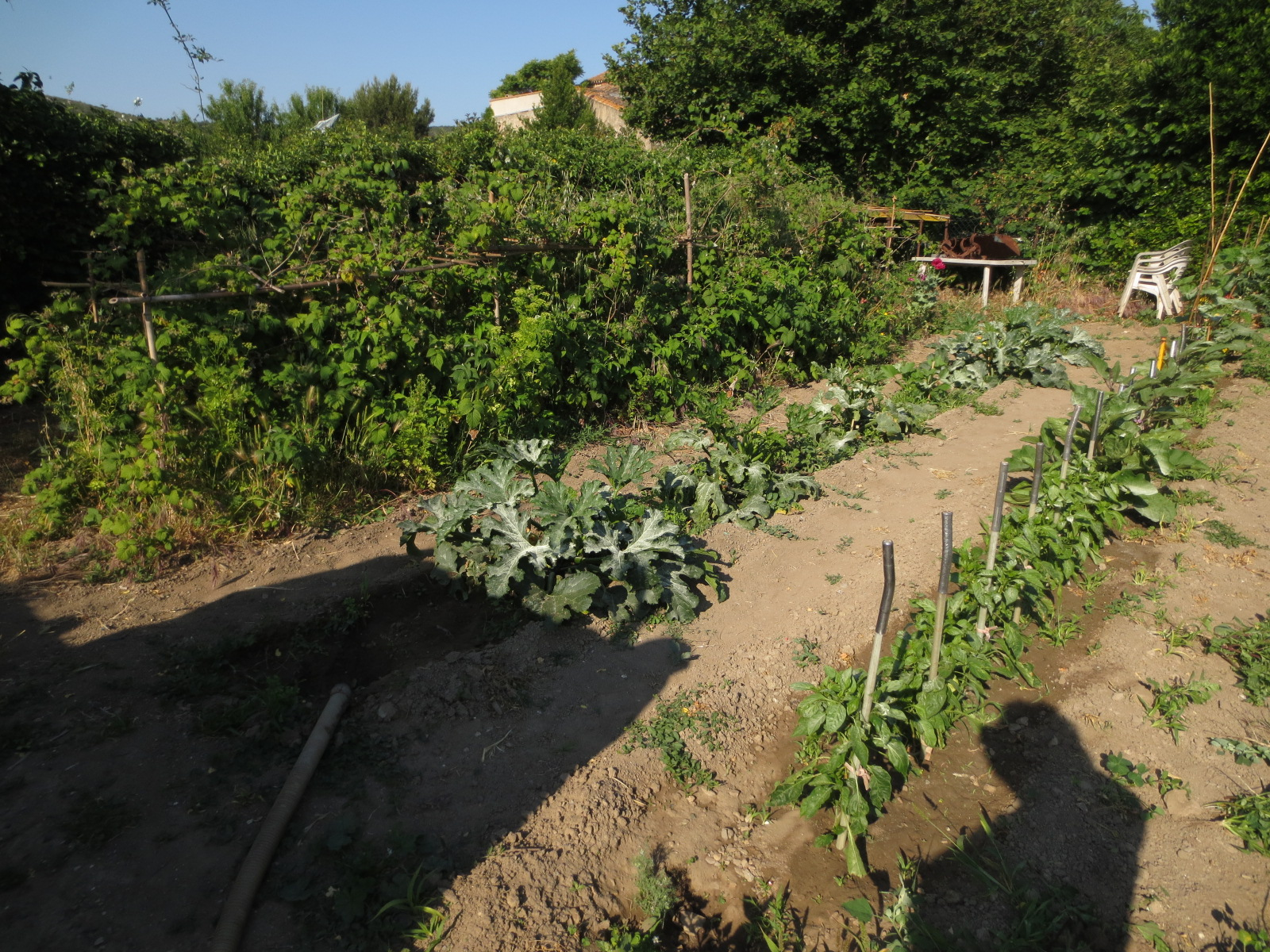 Jardin au mois de juin 2015 for Jardin lune juin 2015
