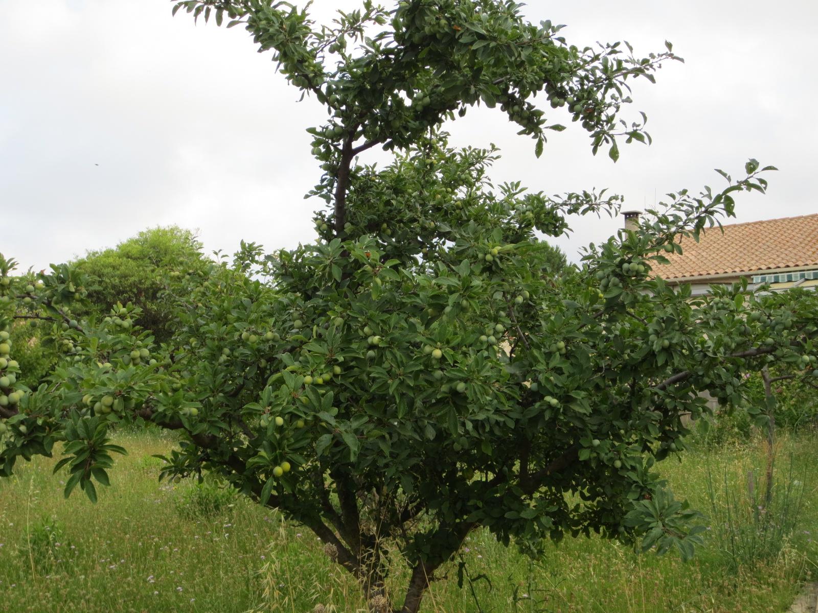 Jardin au mois de juillet 2015 for Au jardin de ma grand mere
