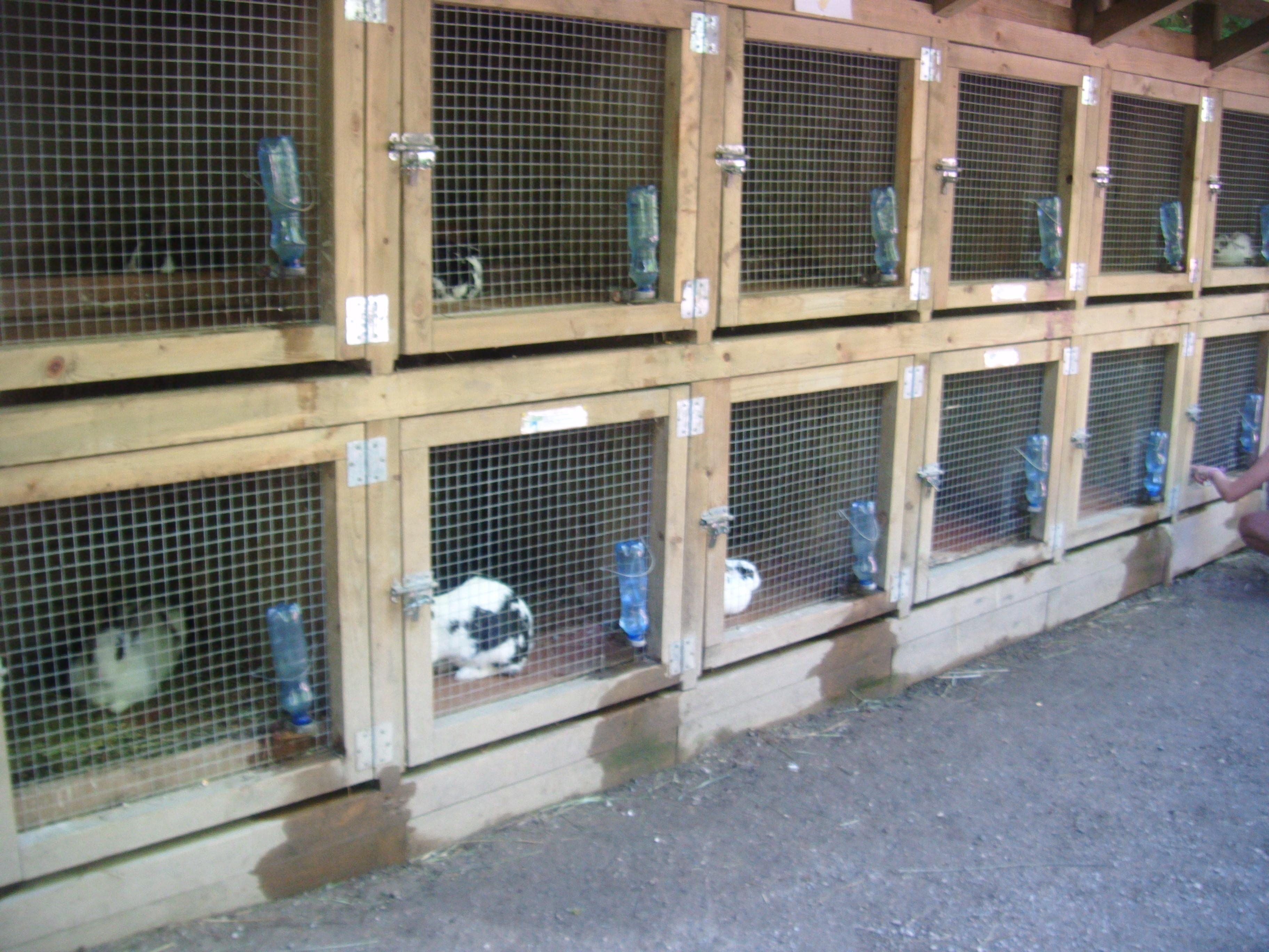 Balade en ari ge le parc des loups a orlu 2 for Clapier lapin fait maison