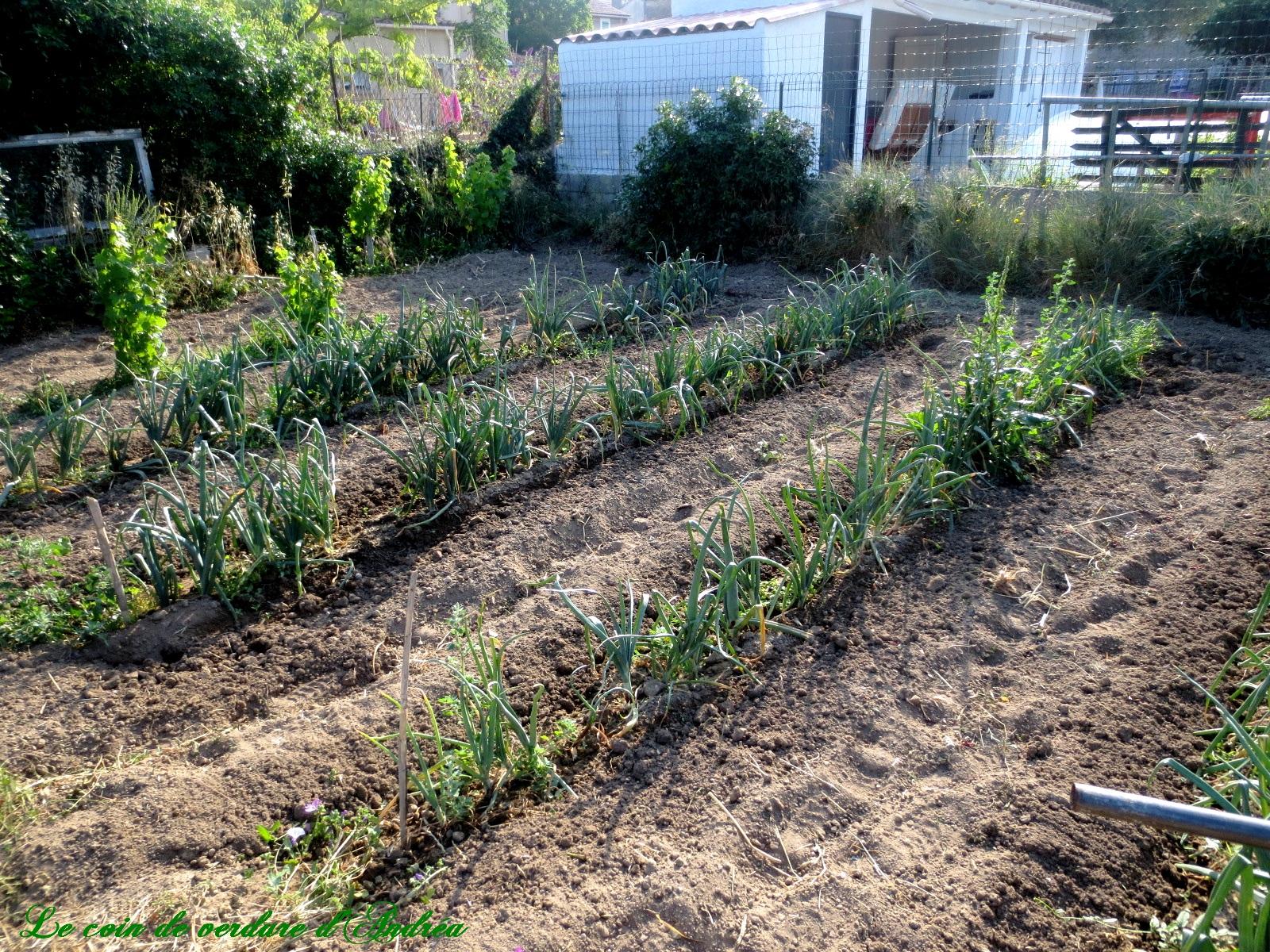 Le jardin potager au mois de juin for Le jardin potager