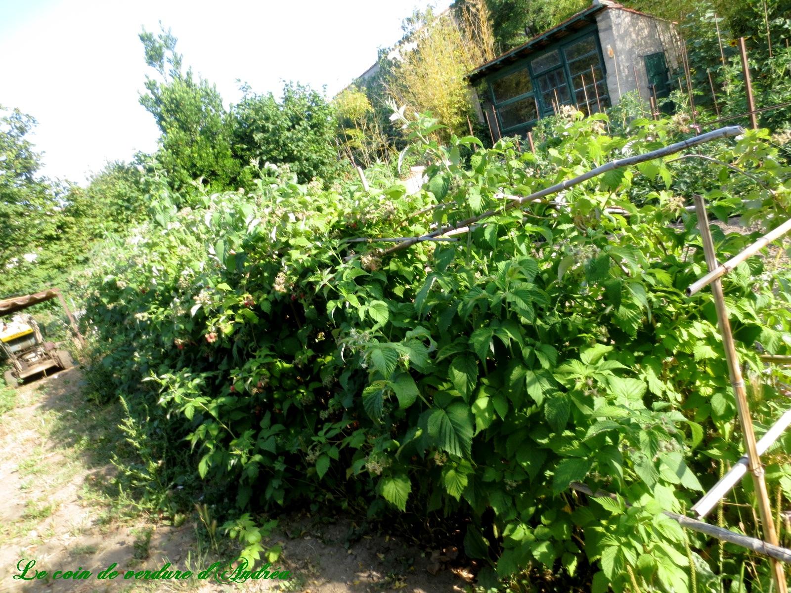 Le jardin potager au mois de juin - Potager mois par mois ...