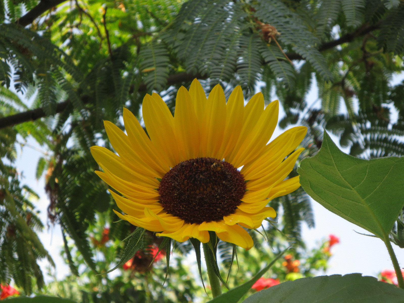 Jardin patio fleurs et abeilles for Jardin et fleurs